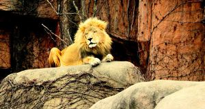 Lions Oh My..... by MoreThanNothing