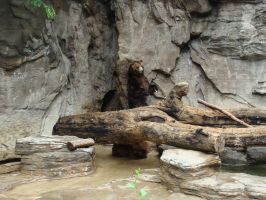 Brown Bear and Grizzly Bear 2 by Feantalia