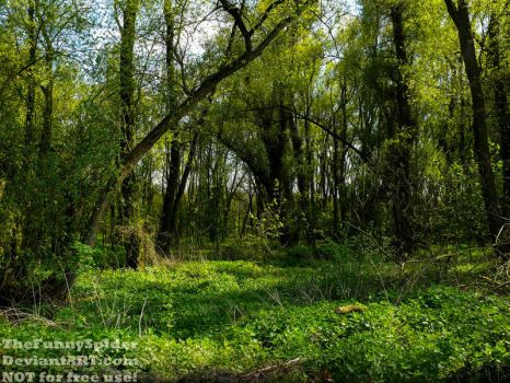 Sunny Spring Forest  in my hometown - May 2017 by TheFunnySpider