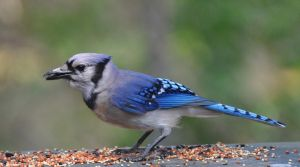 Seedy Jay 6-13-11 by Tailgun2009