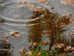 Ripples of Fall by SharPhotography