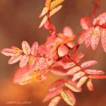 Autumn Leaves by nnIKOO