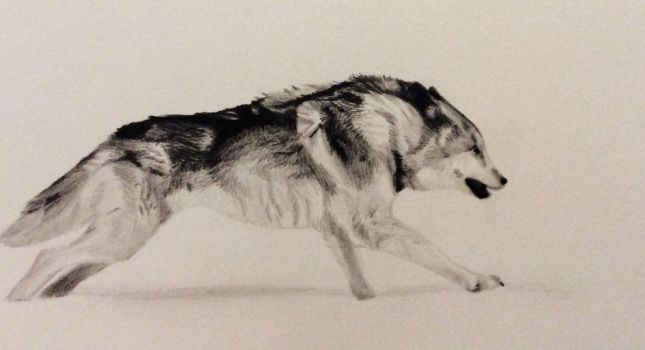 Running wolf by Isadorrah