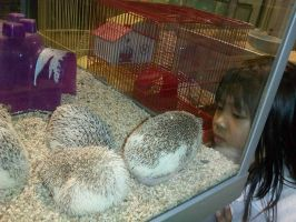 .:Photo:. The Hedgehog and Sis by SEGAMew