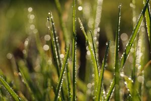 grass dipped in sugar by eatherve