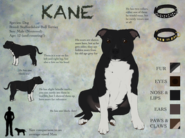Reference Sheet - Kane by PrinzeBurnzo