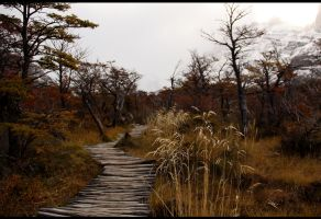 Choose Well Your Path by XS-Tarsier