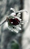 winter is here 10 by xCatiix