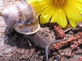 snail. by Insect-Lovers-Club