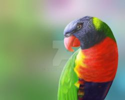 Parrot by Disbag