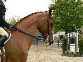 Stock-Chestnut Eq Horse by TopDeckPhotography