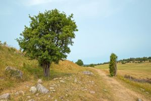 A tree and a landscape nr 1 by attomanen