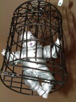 creepy dolly in a cage by JensStockCollection