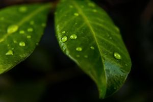 Drops of Nature by InfuzedMedia
