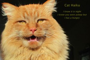 Cat Haiku Hungry by djoneill