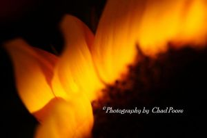 Flames of a Flower by memphis-pooreman