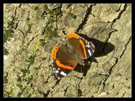 Butterfly 3 by 99-in-the-shade