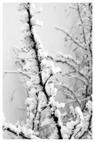 Snow Detail II by anisia-gypsy