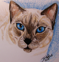 Siamese Portrait by TheMoonfall