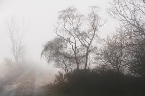 Foggy fog by Louisolah