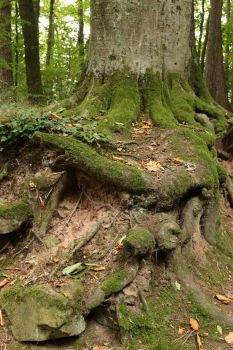 Forest Stock 107 by Malleni-Stock