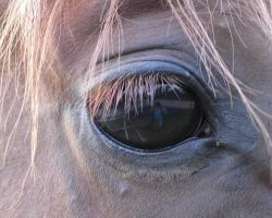 Horses Eye by concettasdesigns