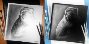 Monkey Inverted Drawing by AtomiccircuS