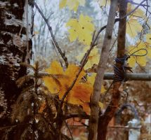 autumn 09. by YesterdayDreams
