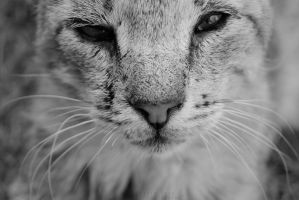 Wink by Alessia-Izzo