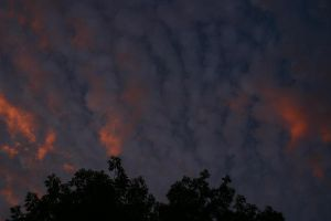 sunset and trees 4 by waterweed-stock