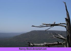 Dead tree with a veiw- STOCK by Rainny-Stock