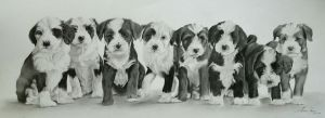 Commission - Tibetan Terrier litter of 8 pups by Captured-In-Pencil