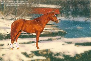 Snowy River by fatdairycows