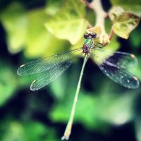 dragonfly 2 by pwojciuk