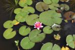Pond Stock 03 by CD-STOCK