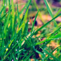greener by illusionality