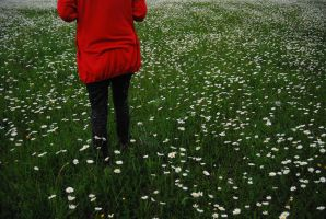 red field by providergirl