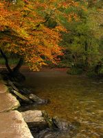 Tarr Steps by parallel-pam