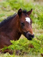 Young Foal by toosas