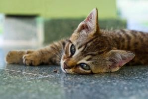 Sleeping Kitteh by Pollito-is-Artzy