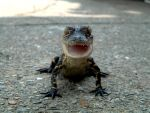 My friend's pet Aligator by endlessnihility