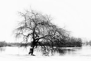 The old Tree by doomed-forever