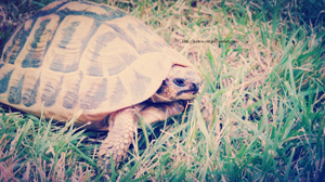 Turtle by Peace-Cat