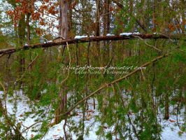 Drooping Pine Theory by LiveInAMoment