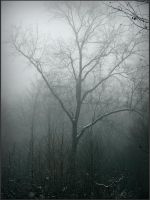 trees in the mist by Weissglut