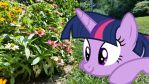Twilight Gets a Closer Look by TheDoubleDeuced