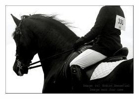 Dressage Suitability by hoodsey
