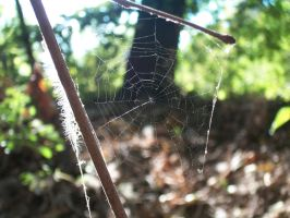 Spider Web. by BabsxStock