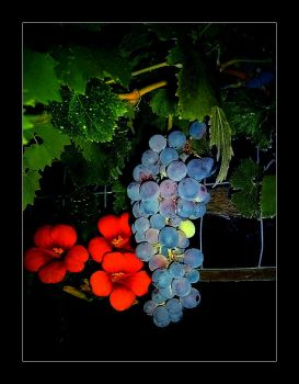 Grape and Flower by ceopz