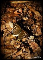 Speckled Wood by KJSummerfield